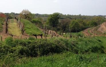 Suprématie bio en Anjou-Saumur