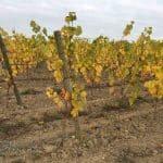 vigne-dun-an