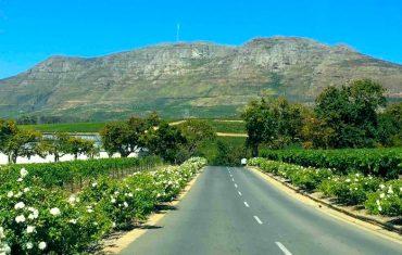 Afrique du Sud#5 : Constantia Valley