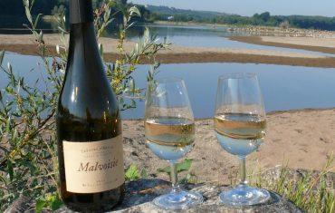 Les vins rares du Pays d'Ancenis