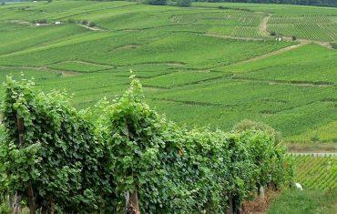 le prix des vignes, derniers chiffres