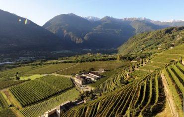 le nebbiolo de Valtellina
