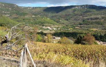 Wine Battle en Languedoc
