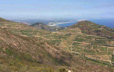 Le vignoble de la Côte Vermeille