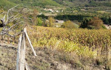 coup de chaud dans les vignobles