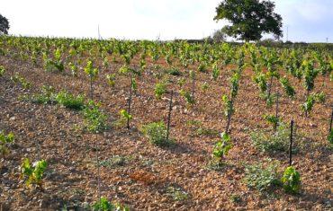le crowdfounding pour le vin ?