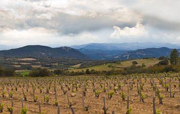 Buzz sur les vins du languedoc