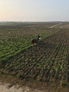 le cheval pour revenir aux sources de la viticulture