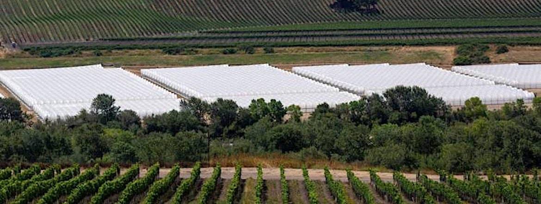 vin et cannabis : chronique californienne