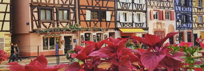Cet été visitez les vignobles : l'Alsace