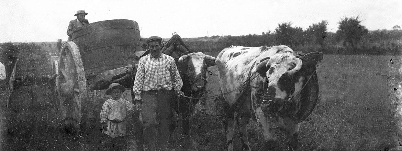 1914, la dernière belle récolte
