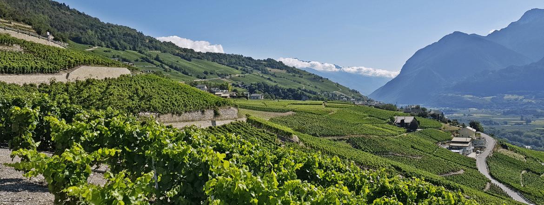 Le vignoble suisse : la diversité en étendard