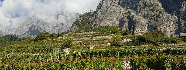 S'installer en Suisse : Clément, jeune vigneron du Valais