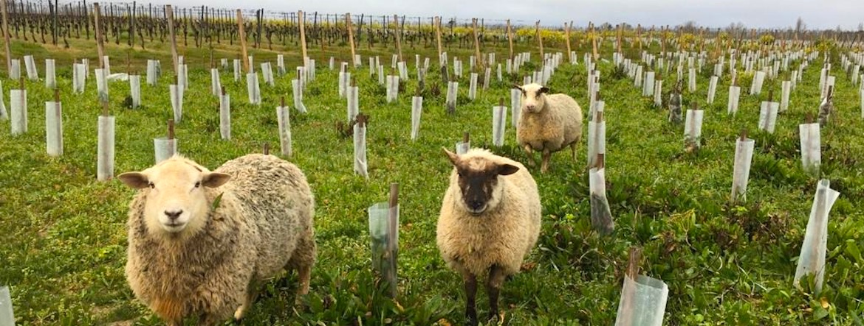 Agroécologie : quand les Bordelais s'y collent