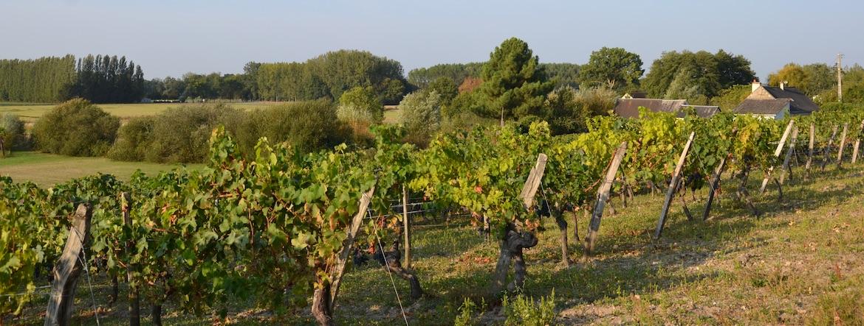 Le prix des vignes 2021